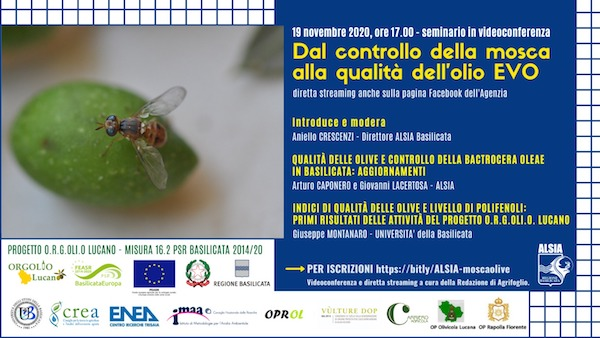Mosca_delle_Olive.jpeg