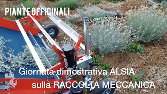 Raccolta_meccanica_officinali_Pollino.jpeg