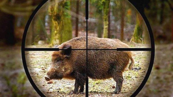 caccia-cinghiale.jpg